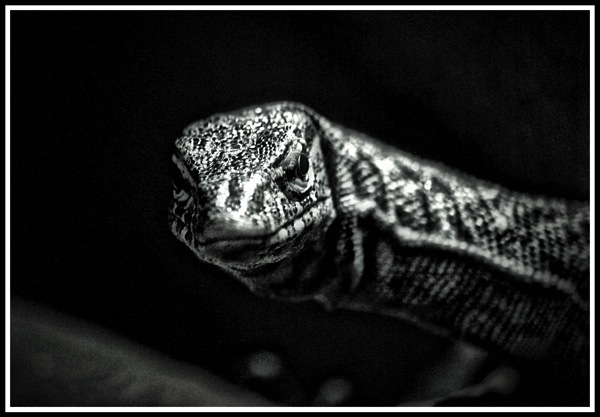 A smile from a lizard thumbnail for Nature & Wildlife Gallery