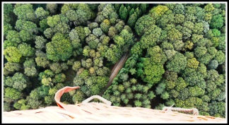 Trees of broccoli during our hot air balloon.