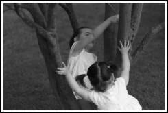 Georgia pushing over the tree