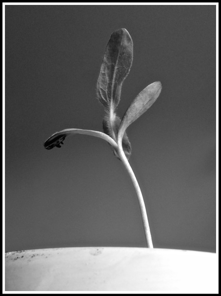 Growing Strong B&W