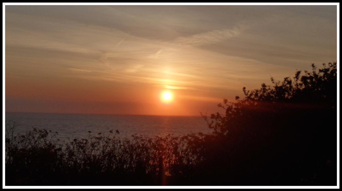 orange sunset shining over bushes