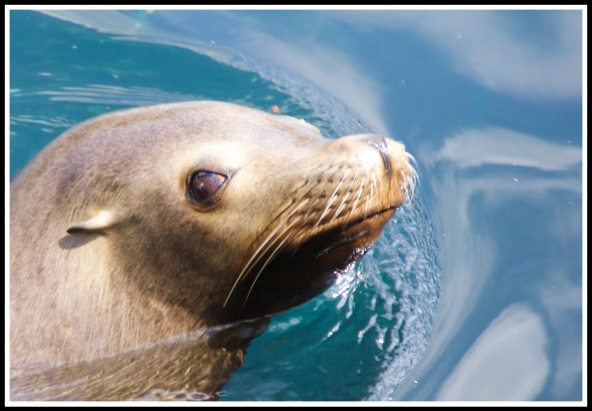 close up of a seals head poking out of the water