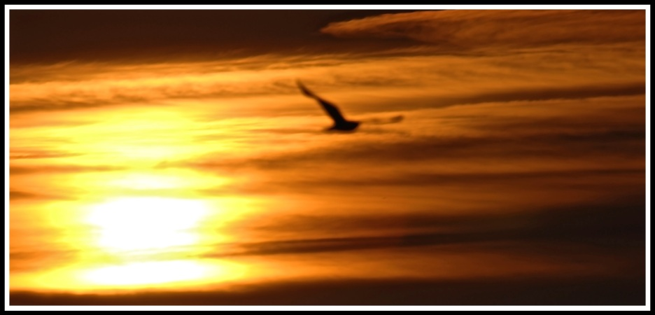 Horizontal streaks on sunlight with a bird flying out of the sky
