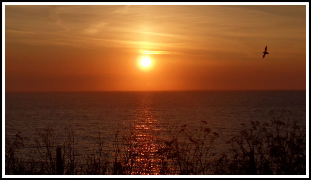 The orange sun is centred and streaming light across the sea as a lone bird is seen on the right