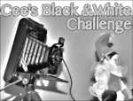 Please click to join Cee s Black  White Challenge