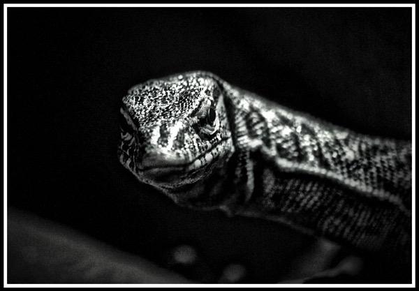 Lizard thing lol