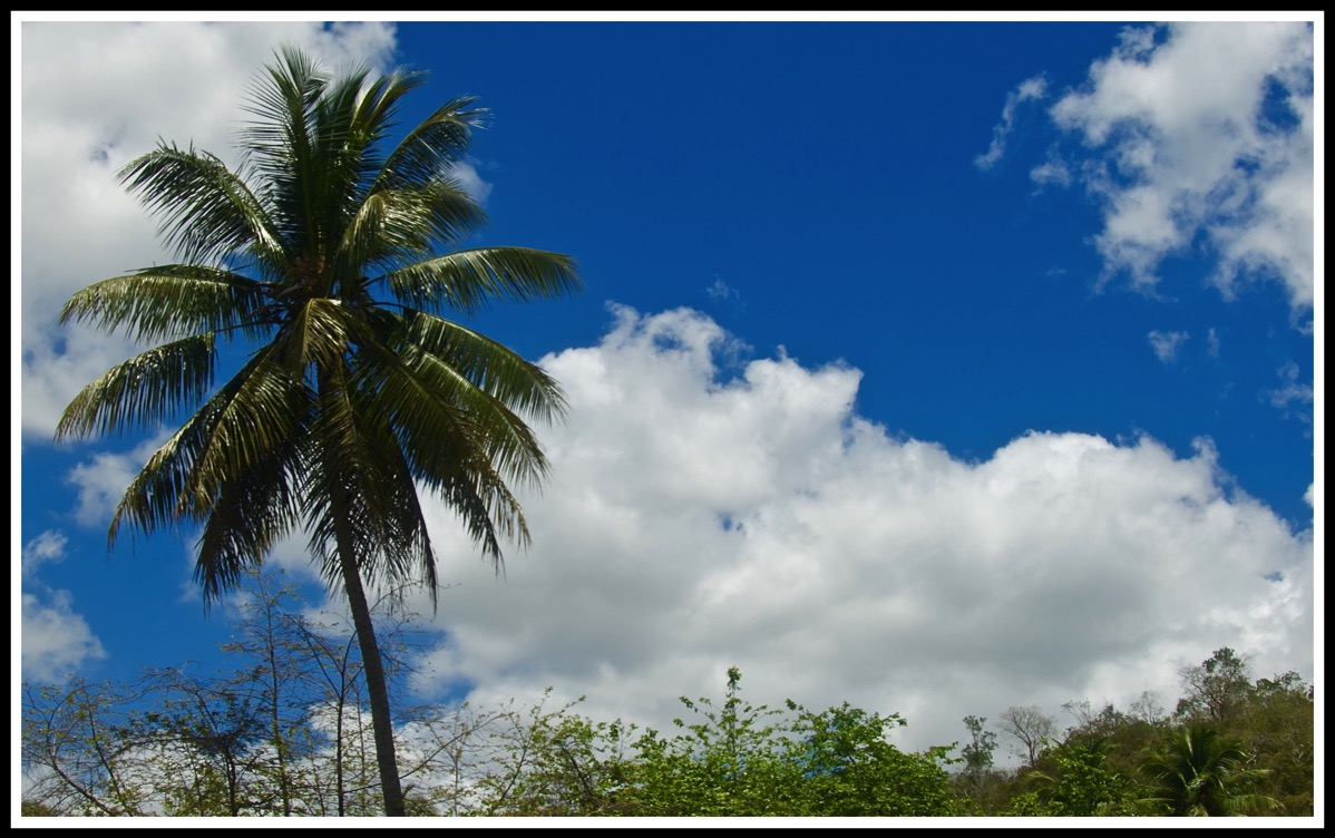 A palm tree stood on the left with a beautiful blue sky and some clouds