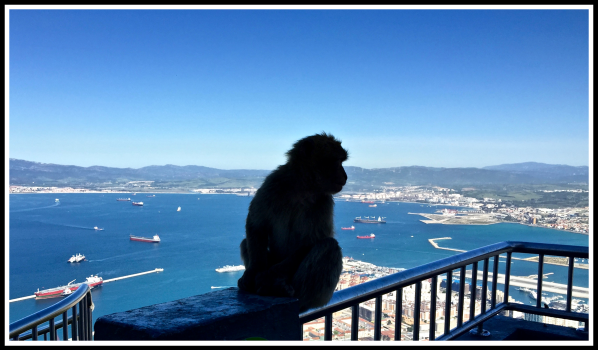 Photo of a monkey sat on a railing fence looking out ove the bay of Gibraltar