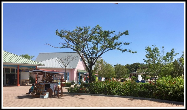 13 Roatan Dock Tree