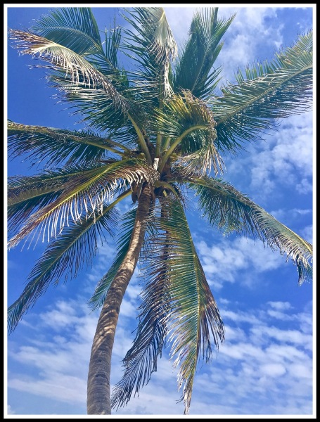 A STUNNING PALM TREE WITH DEEP BLUE SKY ALL AROUND