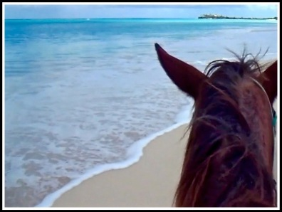 A photo from on the horse looking forwards with its head in view overlooking the stunning sea and beach at St James Beach, Antigua