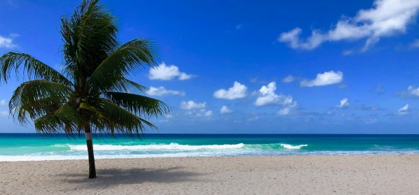 A palm tree on the left aurround by perfect Caribbean blue sea and white sands