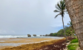 Soup Bowl 2, Bathsheba, Barbados